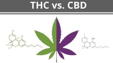 The Benefits of Using Tetrahydrocannabinol (Thc) and Cannabidiol
